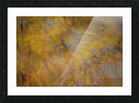 Autumnal swirls reflections 2 Picture Frame print