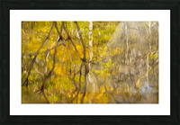 Autumnal swirls reflections Picture Frame print