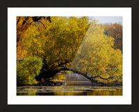 Arc de Treeomph Picture Frame print