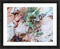 Cactus Impression et Cadre photo