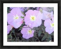 Flowers Impression et Cadre photo