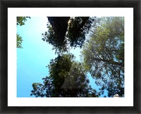 Looking To Heavens Picture Frame print