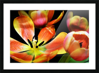 Tulip 1 Picture Frame print