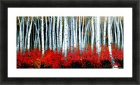 Autumn Aspens Picture Frame print