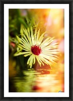 Sun worshippers yellow Picture Frame print