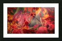 Rouge dautomne Impression et Cadre photo
