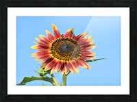 outstretched Picture Frame print