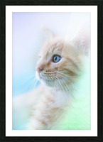 catshadow Picture Frame print