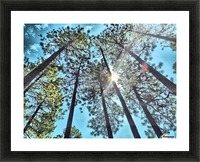 Tree Tops Picture Frame print