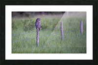 0077 - Great Grey Owl Fence Line Hunter Picture Frame print