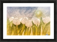 white Tulips  Picture Frame print