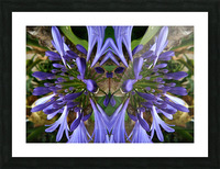 flower3 Picture Frame print