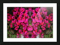 flower29 Picture Frame print
