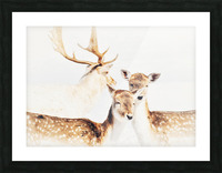 Douceurs Picture Frame print