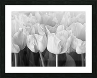 Bunch of Tulips close-up Picture Frame print