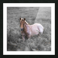 Wild Horses, New Forest Picture Frame print