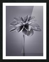Dahlia Flower Picture Frame print