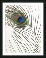 Peacock feather Impression et Cadre photo