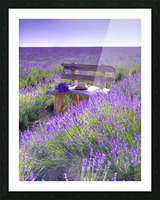 Bench in Lavender field Picture Frame print