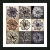 Collage of Dahlias flowers Picture Frame print
