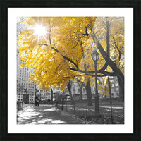Pathway through Central park, New York City Picture Frame print