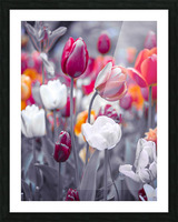 Colorful Tulip flowers Picture Frame print