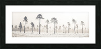 Snowy forest in winter Picture Frame print