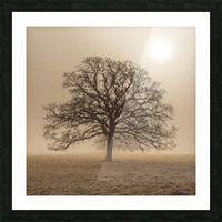Trees in grass fields Picture Frame print
