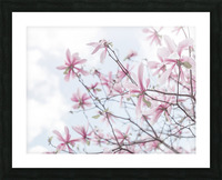 Magnolias against sky Picture Frame print
