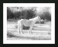 Horses at the New Forest, UK Picture Frame print