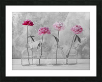Peonies in glass bottles Picture Frame print