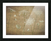 Cow parsley flowers on coloured background Picture Frame print