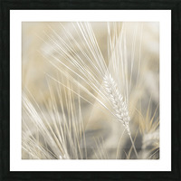 Wheat close-up Picture Frame print
