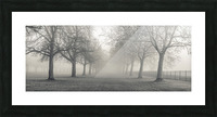 Pathway through trees Picture Frame print