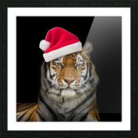 Tiger with Santa hat Picture Frame print