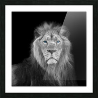 Lion face Picture Frame print