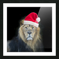 Lion with Santa hat Picture Frame print