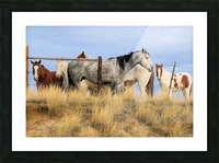 Little Bighorn Ponies Picture Frame print