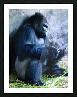 Alone Mountain Gorilla Africa Picture Frame print
