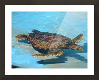 Sea Turtle - Natural World Kids Gallery Picture Frame print