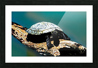 Snapping Turtle Picture Frame print