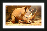 Rhino - Natural World Kids Gallery Picture Frame print
