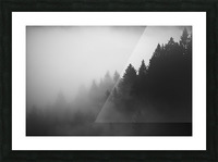 Pine trees in the fog Picture Frame print