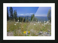 Sierra Nevada in Spring 5 of 8 Picture Frame print