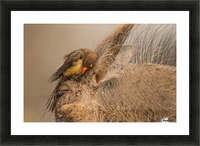 Hideaway by Jaco Marx  Picture Frame print