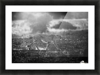 Backlit Cheetah by Jaco Marx  Picture Frame print