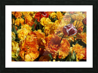 Tulips of the Netherlands 2 of 7 Picture Frame print