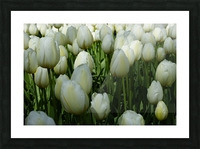 Spring Blooms of Holland 2 of 8 Picture Frame print