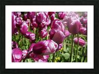 Purple Picture Frame print