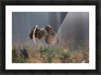 Eurasian Eagle-Owl by Milan Zygmunt  Picture Frame print